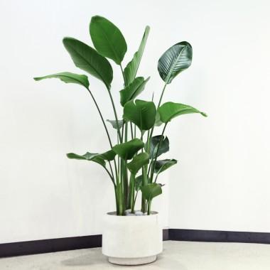 관상용 식물, 관엽식물에 대해